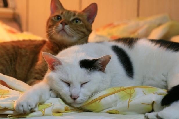 Cat20070428