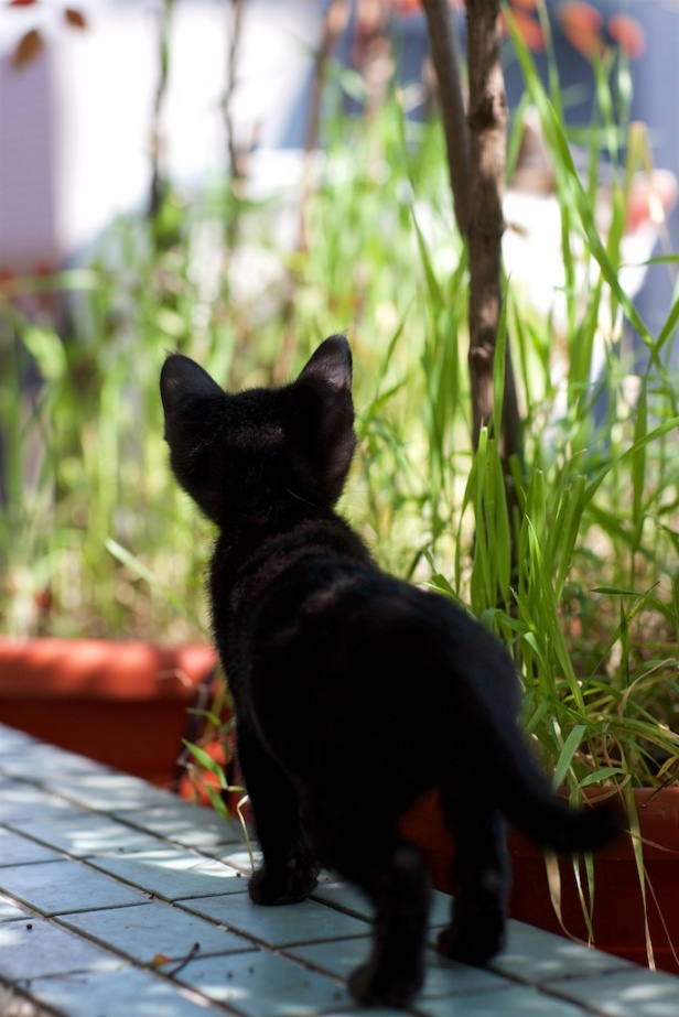 003_Cat20110424_013