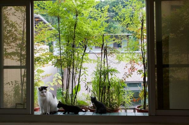 007_Cat20110426_010