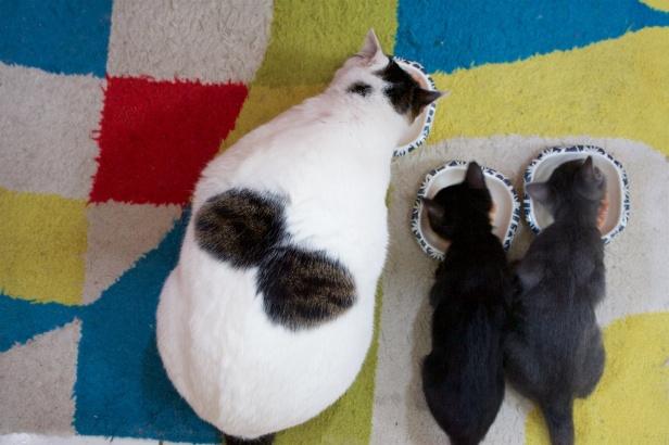Cat20110501_003