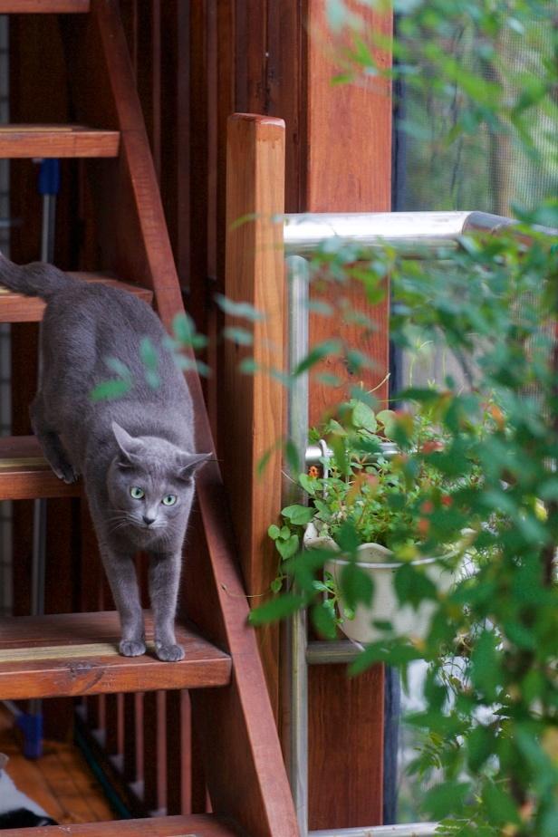 Cat20150201_044