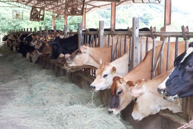 026酪農牧場