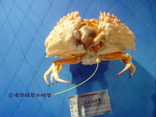 龜山島螃蟹藏酒028