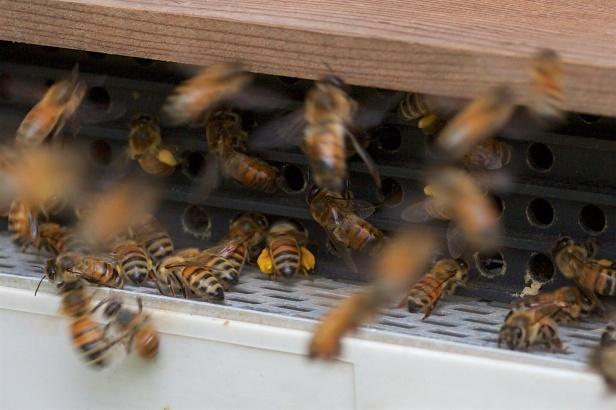 蜜蜂的故事01