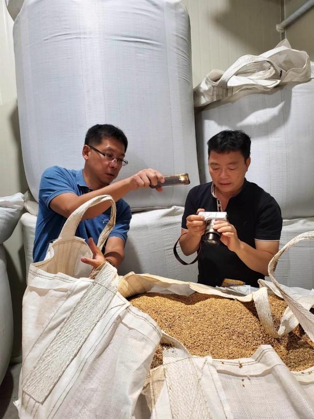 稻米收割之後004